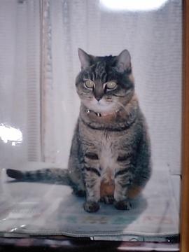 東海地方のAさんの愛猫